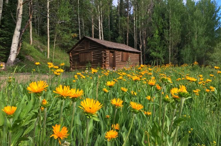 breckenridge flowers for planting plant